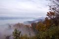 mountain mist