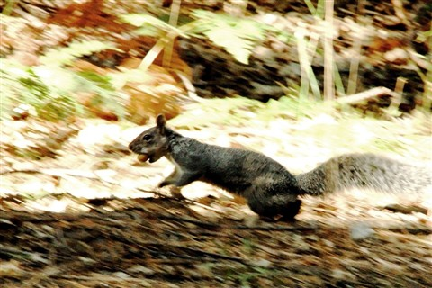 Squirrel on the Run
