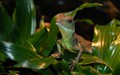 LizardDSC_4540