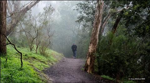 Misty jogger