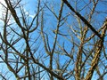 Bare Branches in Winter