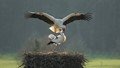 Stork love