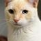 Jewel_20180626_ARL Cat_002-29