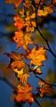 20110924-fall foliage-106