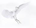 Egret in High Key