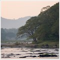 Trees by the Periyar