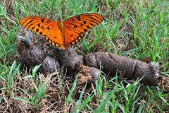 Orange butterfly on brown