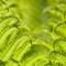 1305 Ferns (44 of 54)