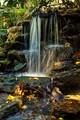 Selby Garden Falls