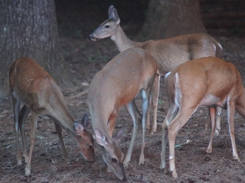 FD200mm2.8@2.8 LOW light HIGH ISO6400 Deer 472