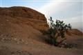 DESERT FOLAGE