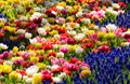 Flowers at the Keukenhof exhibition in The Netherlands