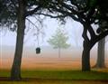 Bird House in Fog