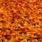 Floor of Leaves
