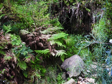 _1050964_waterfall gully_20100411_105