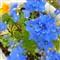 Blue Flowers hint of Orange