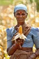 South Indian farming woman with corn
