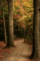 Nolan Trail
