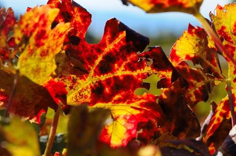 Pic 2011-10-29_14-14-50 2