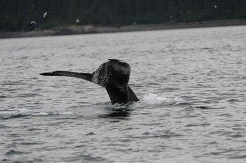 Whale Tour_002