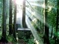 Mt. Hood's Woods