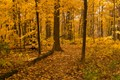 Yellow_Trees_Northwoods_Park-1827