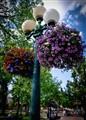 Street Lamp in NM