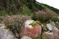 Summer in Svaneti