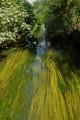 Lambro River near Chiaravalle Abbey (Milan)