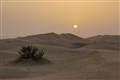 Green Desert