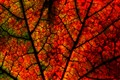 Nature's Stained Glass