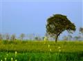 landscape ver 2(2)