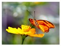 The yellow flower and orange butterfly