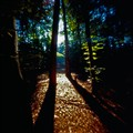 Pinhole Forest