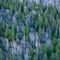 Pale Forest of Kaii Higashiyama