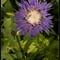 flower_0715