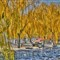 China Imperial Garden-