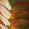 San Diego Succulent