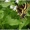 Butterfly 01-02