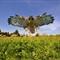 DGB_7837_Redtail Hawk