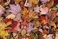 Appalachian Trail leaf fall