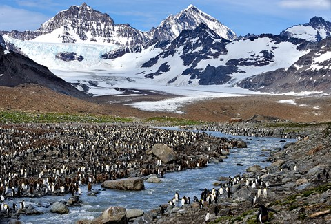 Glacier and penguins so georgia