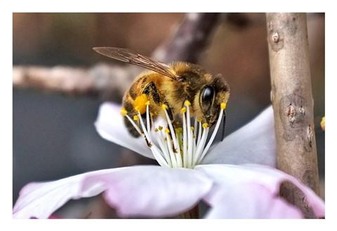 Bee Malzeit