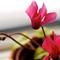 Stign Flower 1
