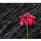 ref flower