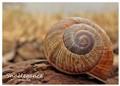 Snailegance