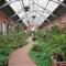 Interior of Linnean House, at Missouri Botanical Garden (Shaw's Garden), in Saint Louis, Missouri, USA