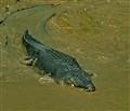 12  Adelaide river Australia