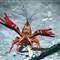 Crayfish 011