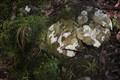 Lichen encrusted rocks